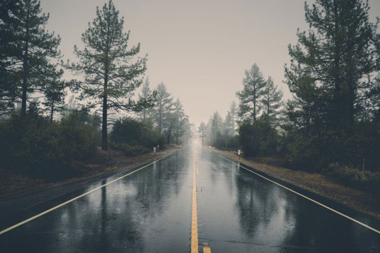 Foggy morning on a wet road in the forest