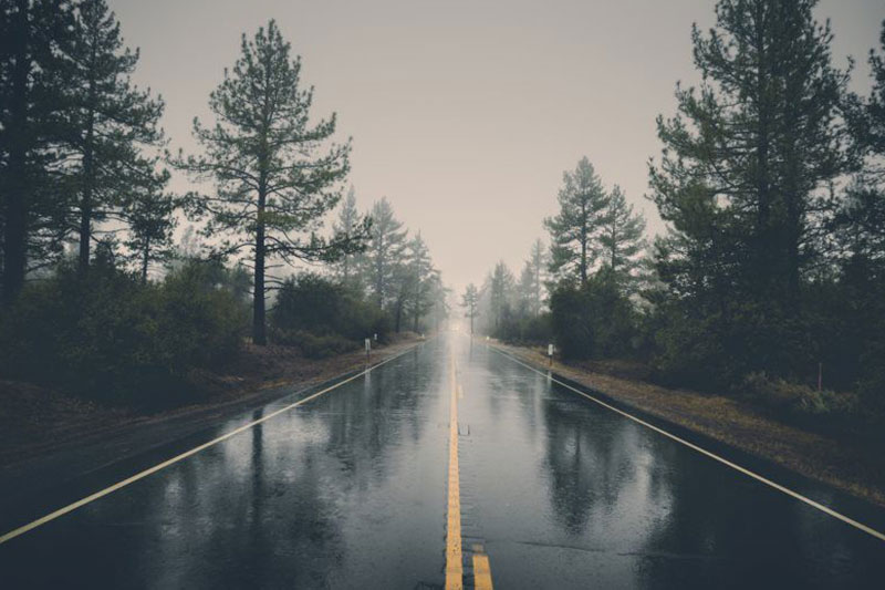 Foggy, wet morning on a tree lined road